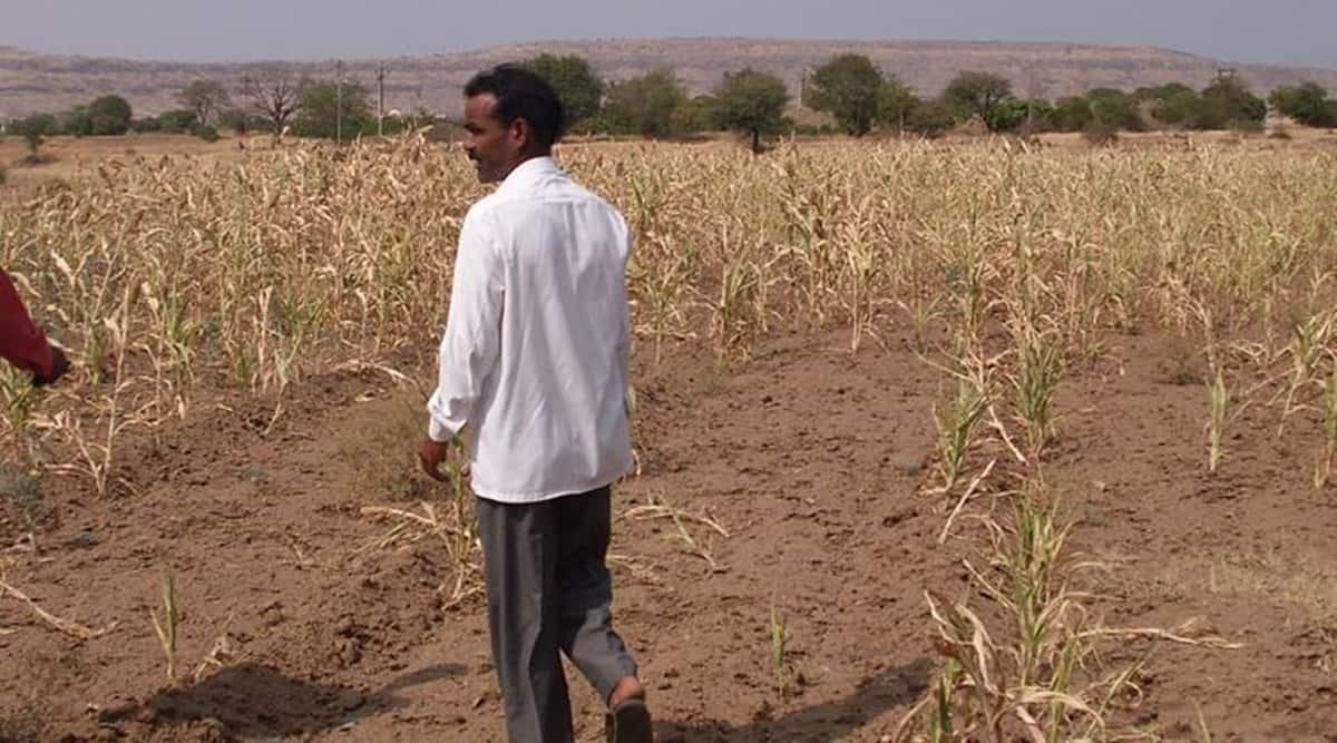 Maharashtra crop loans, Maharashtra crop loans disbursal, Maharashtra crop loans online application, Balasaheb Patil, Maharashtra crop loans private banks, indian express