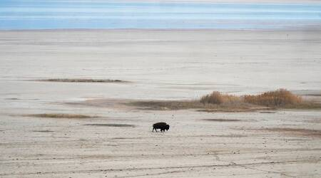 A lone bison walks along the receding edge of the Great Salt Lake on his way to a watering hole on April 30, 2021, at Antelope Island, Utah.