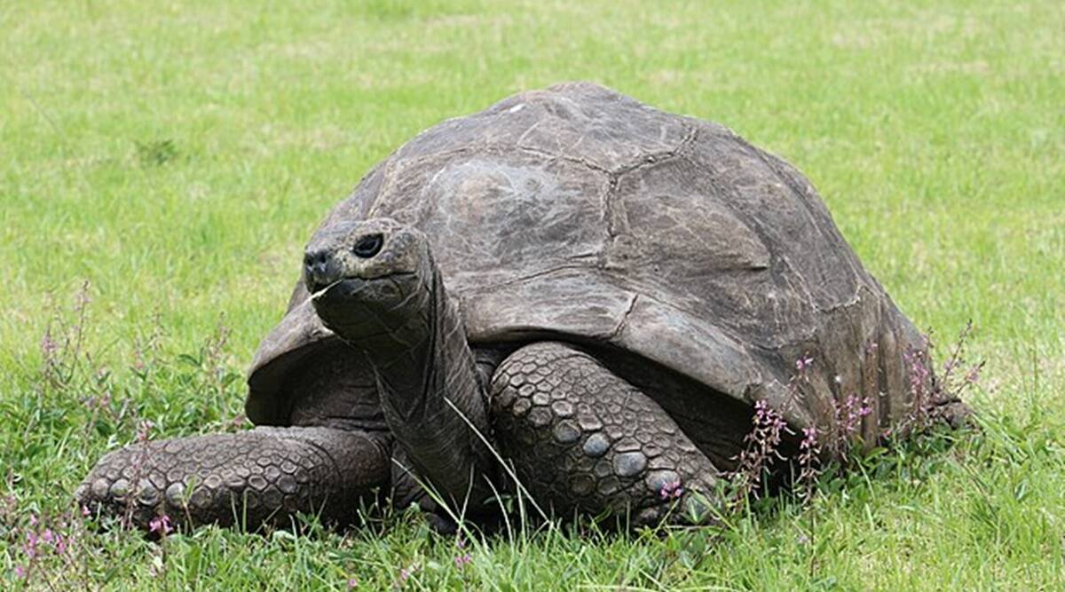 tortoise demanded as dowry, dowry cases maharashtra