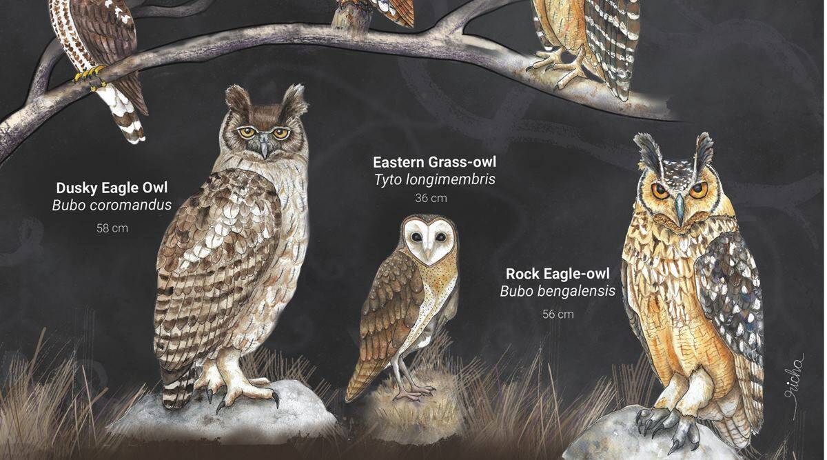owls of india