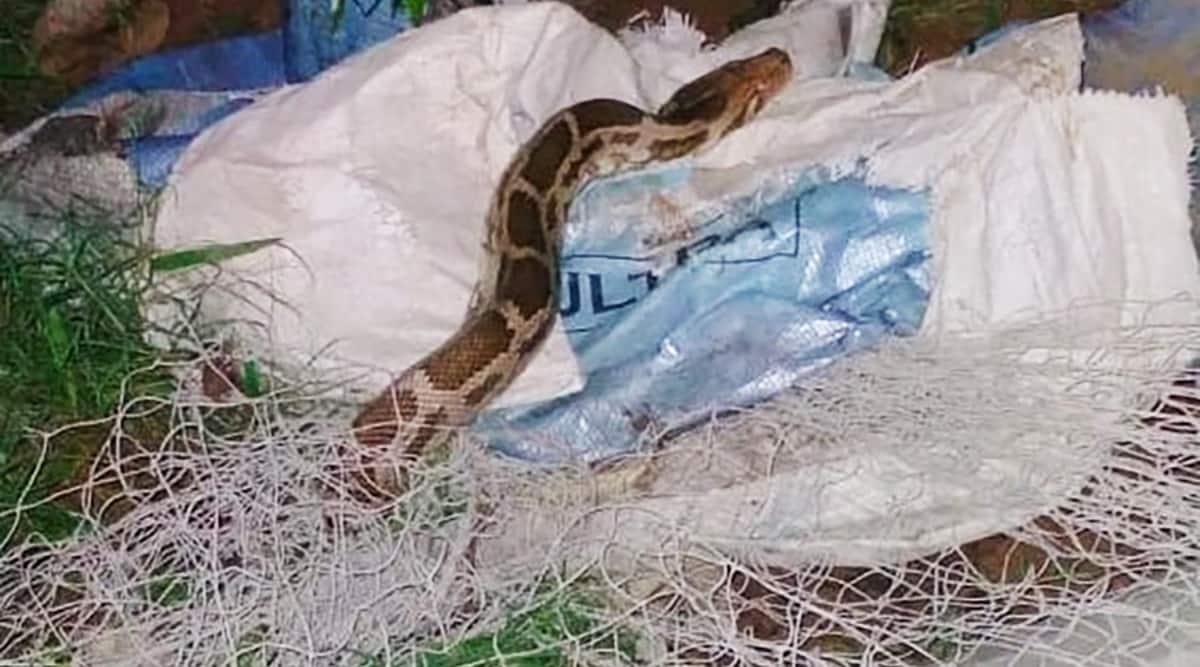 Gurgaon, python