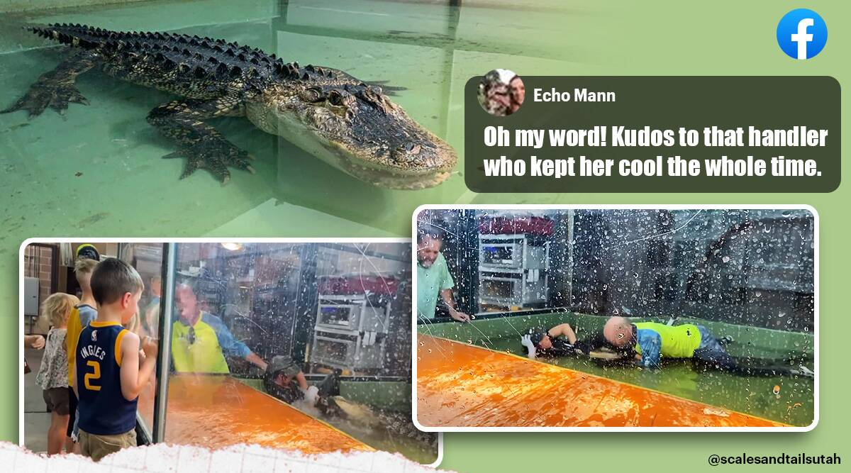 alligator attack, alligator attack handler, utah reptile park alligator bite trainer arm, guest save handler from alligator attack, viral news, indian express