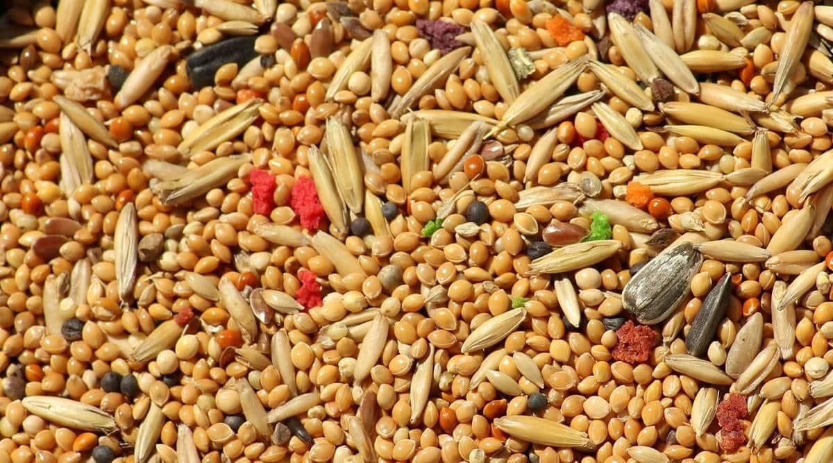 fibre, grains, millets