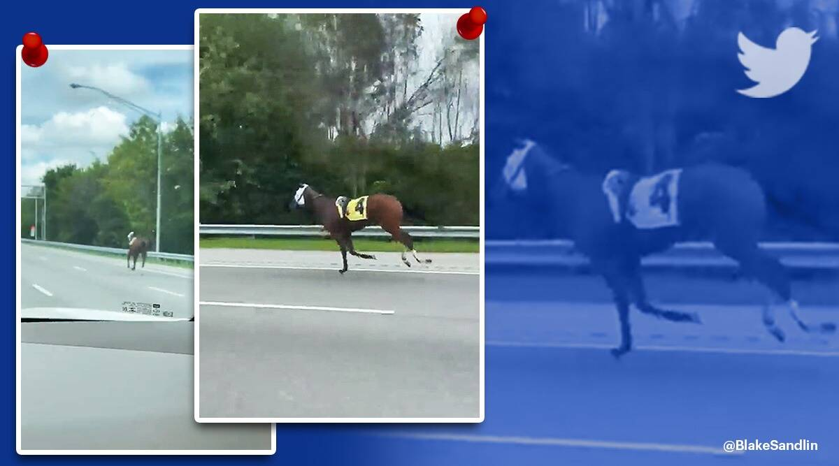 Racehorse Escapes To Expressway At Ellis Park viral video, Bold and Bossy, Bold and Bossy racehorse viral video, trending, indian express, indian express news