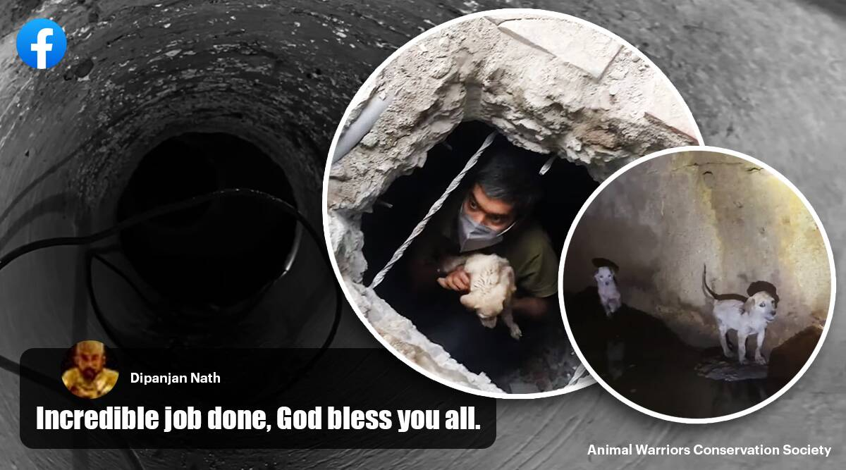 puppies rescued from high drain, hyderabad puppy rescue, Animal Warriors Conservation Society, awcs animal rescue video, good news, indian express