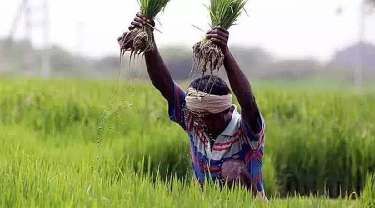 Soybean, Black gram, kharif crop, gujarat agriculture, Kharif season, indian express, indian express news, gujarat news, gujarat news today