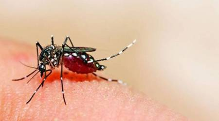Zika Virus, Central team, Pune Zika virus