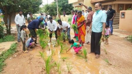 Medarahalli main road , bengaluru, bangalore news, paddy, Cauvery water, indian express, indian express news