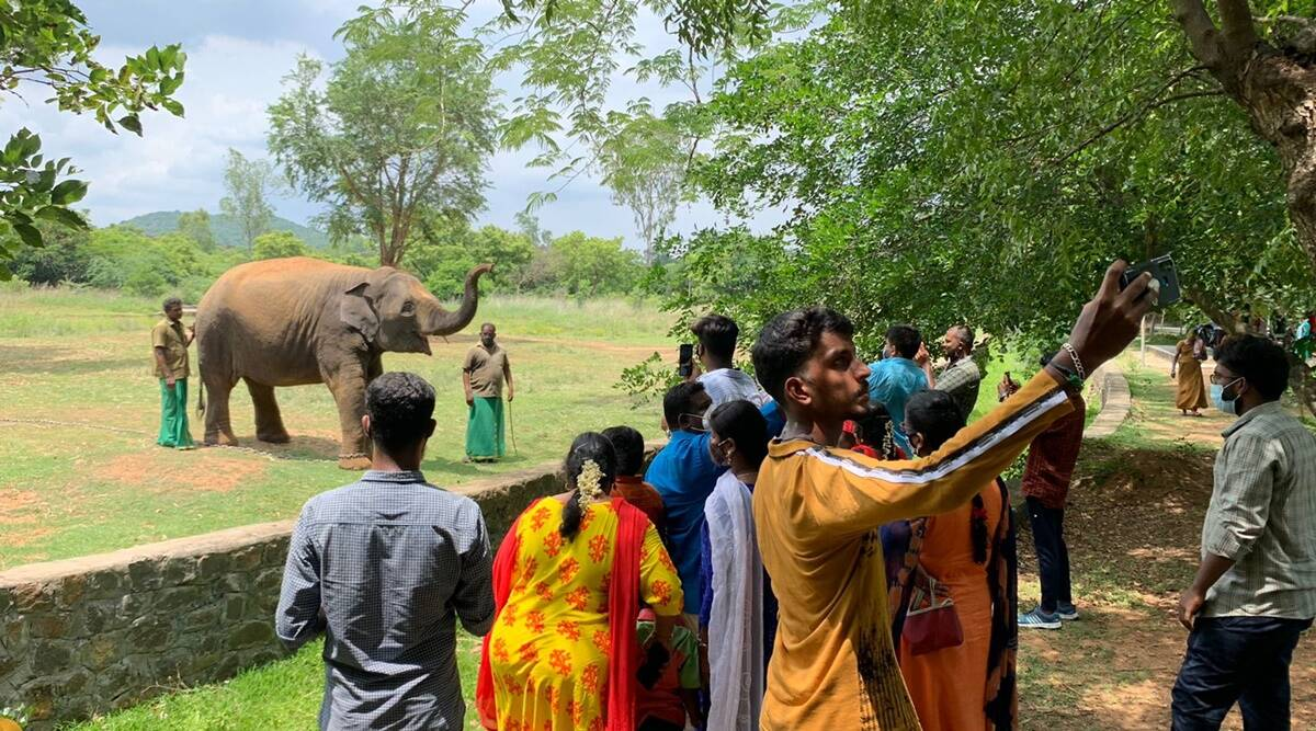 Tamil Nadu: Vandalur zoo reopens after 127 days amid strict Covid guidelines
