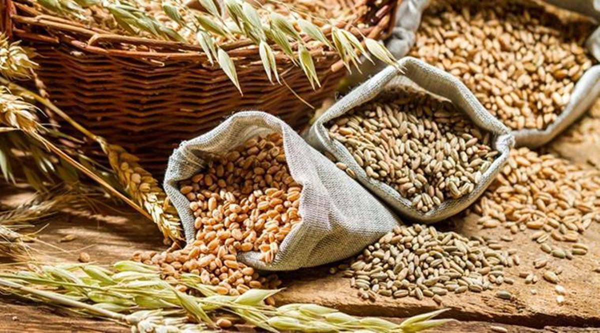 Satara, koregaon, ARI, wheat, soybean, Maharashtra agriculture department, maharashtra farmer, satara farmer, indian express, indian express news, pune news