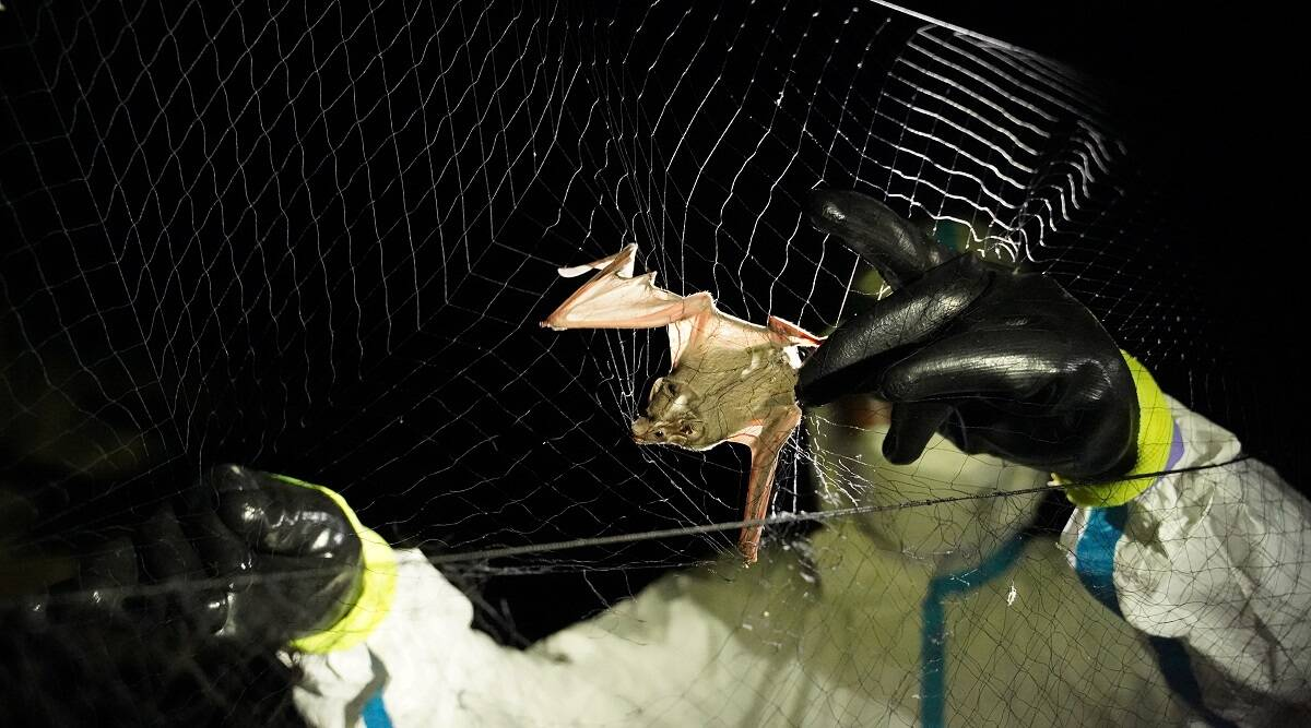 Cambodia bat researchers on mission to track origin of COVID-19   World  News,The Indian Express