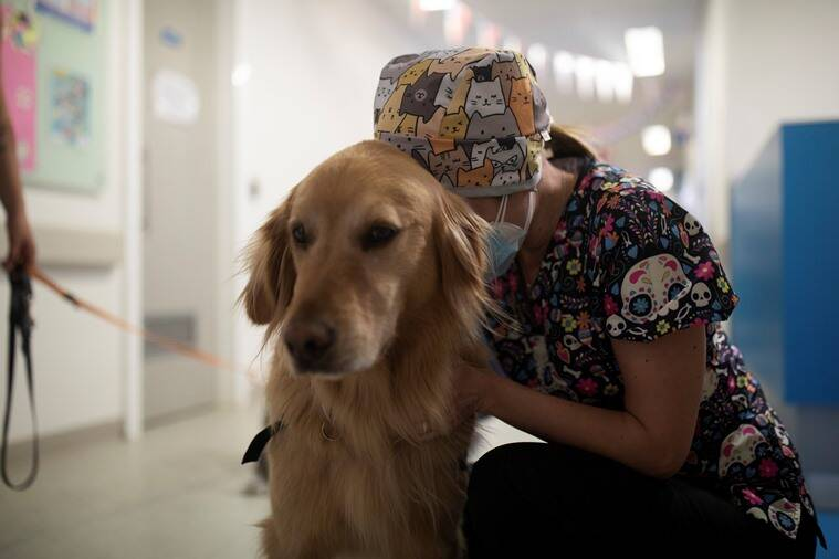 Animal-assisted therapy, what is Animal-assisted therapy, Animal-assisted therapy stress