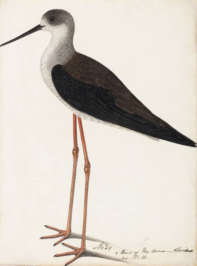 rt exhibition, DAG exhibition, birds of India company paintings exhibitions