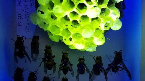 wasp UV