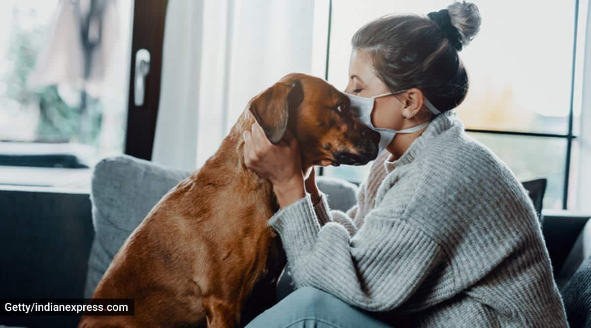 pets, pet care, bonding with pets, pet dog, pet cat, pet bird, how to bond with pets, how to take care of pets, training pets, indian express news