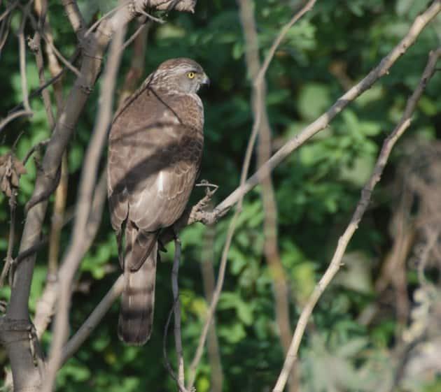 ranjit lal, mother nature
