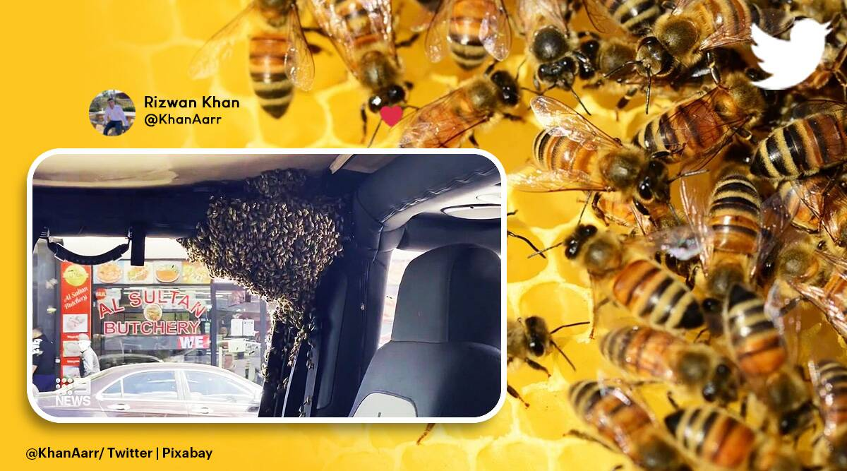 bees in car, swarm of bees in car, Sydney man car bees, man return from shopping bees in car, bizarre news, odd news, viral news, indian express