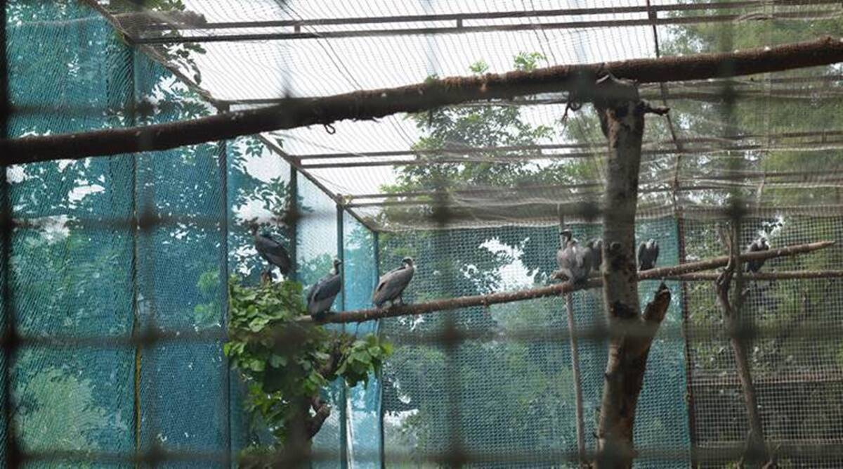 Chandigarh administration, ministry of environment , forest and climate change, chandigarh bird aviary, manega gandhi, chandigarh news, indian express, indian express news, current affairs