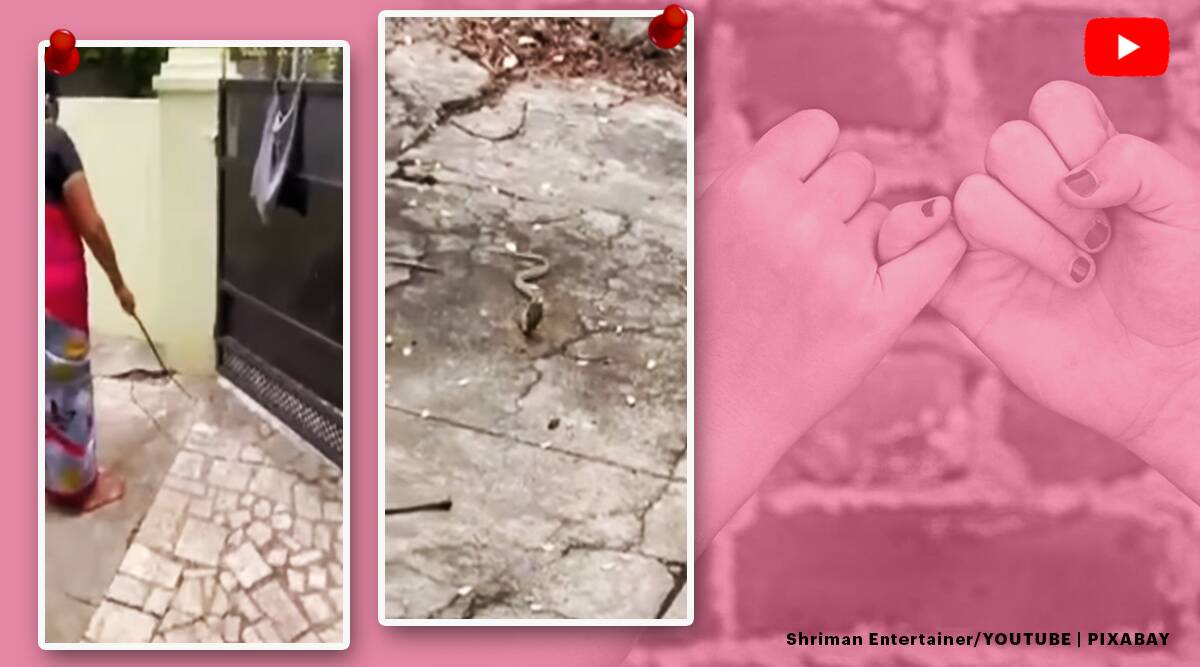 woman asks snake to leave house, tamil nadu woman coax snake with milk, woman promise to visit snake, cobra video, snake videos, viral videos,