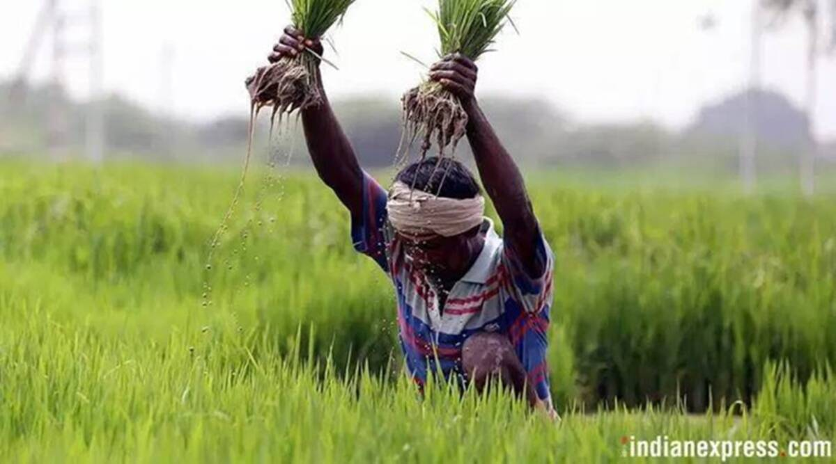 Farming, farmer