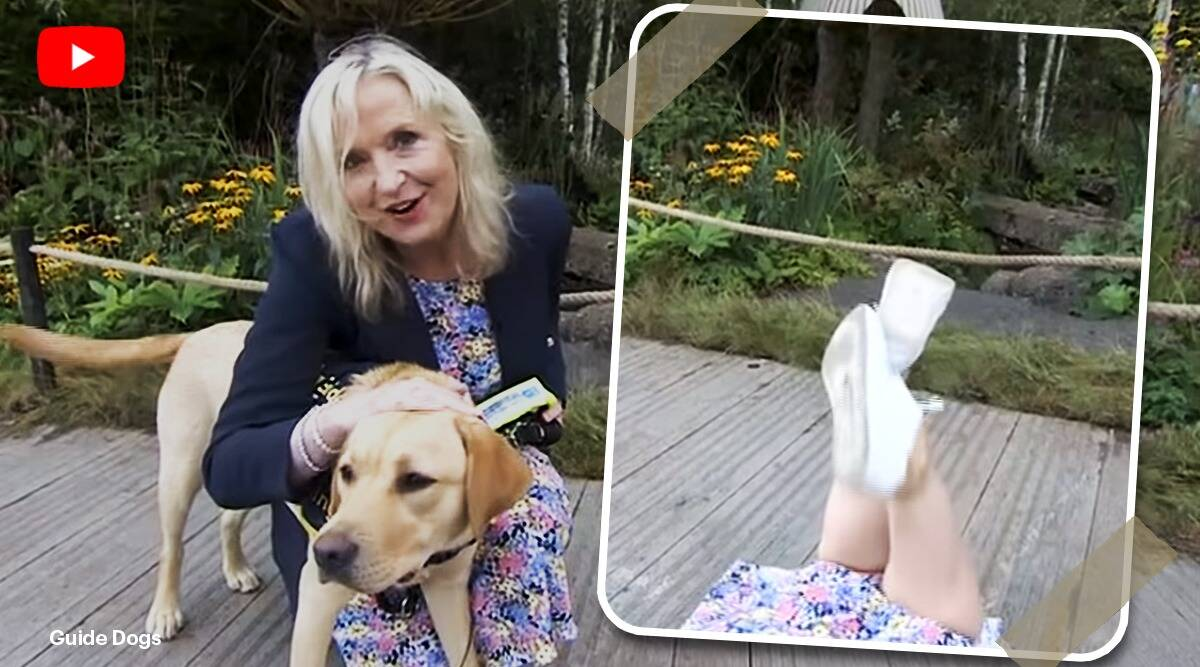 bbc weather reporter guide dog viral video, Guide Dog pulls Carol Kirkwood to the Ground at Chelsea Flower Show, trending, indian express, indian express news