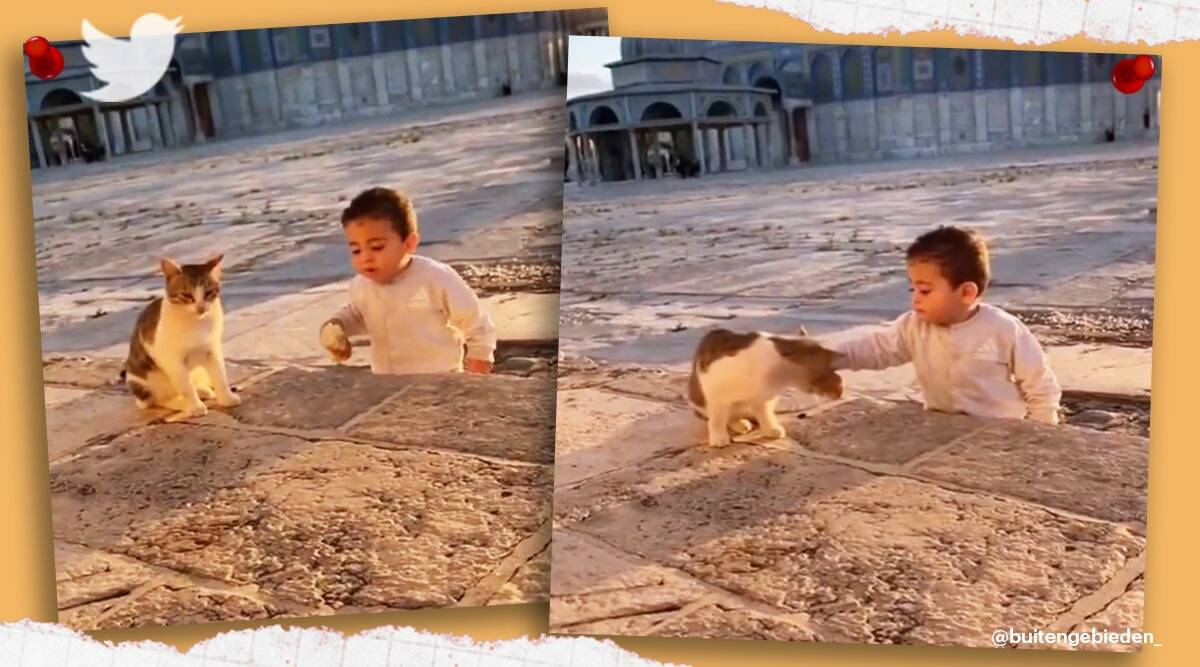 Video of little boy sharing food with cat goes viral, cat viral video, boy shares food with cat viral video, trending, indian express, indian express news