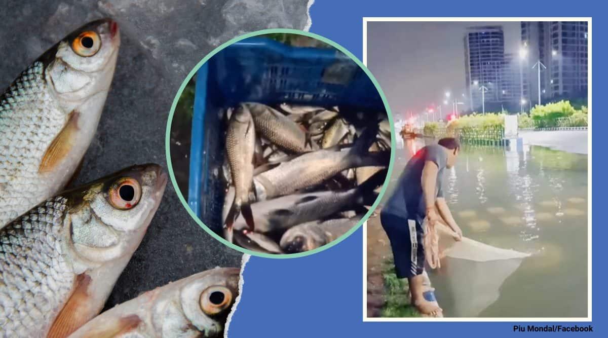 kolkata rains, kolkata water logging, new town water logging, fish new town streets, locals catch fish kolkata streets, viral videos, indian express