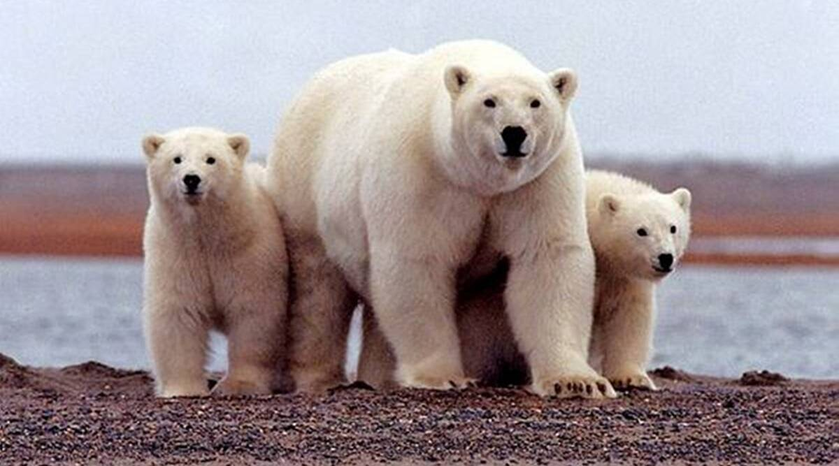 US House panel passes reconciliation bill protecting Arctic reserve from drilling