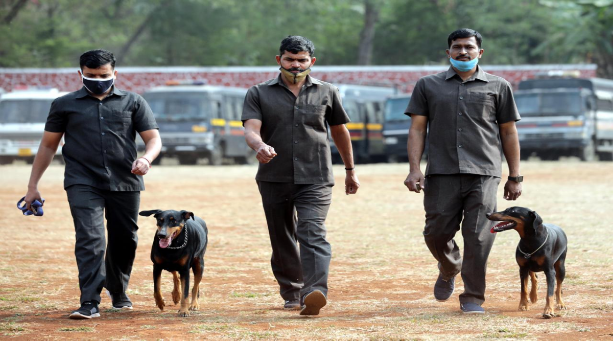 Excise dept seeks to induct dog squad to track smuggled liquor that enters state from Goa, Daman