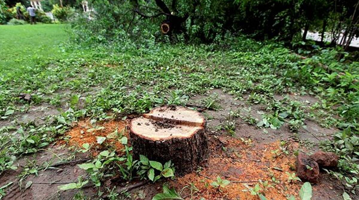 Pune: Sandalwood trees stolen from NCL Colony