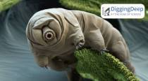 Have you seen tardigrades walk? Scientists decode why they trot like insects