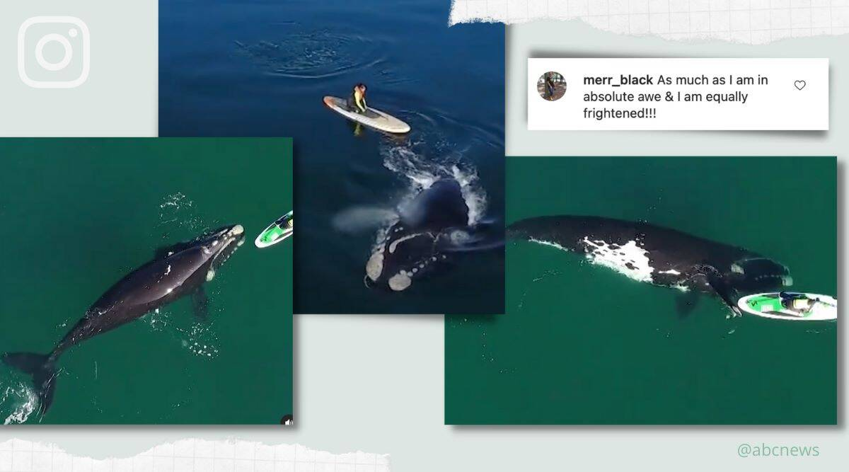 Golfo Nuevo Whale, Whale paddleboarder viral video, Whale viral video, Argentina whale viral video, trending, indian express, indian express news