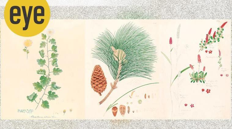 book, book review, Indian Botanical Art: An Illustrated History, Indian botanical artists, eye 2021, sunday eye, indian express news