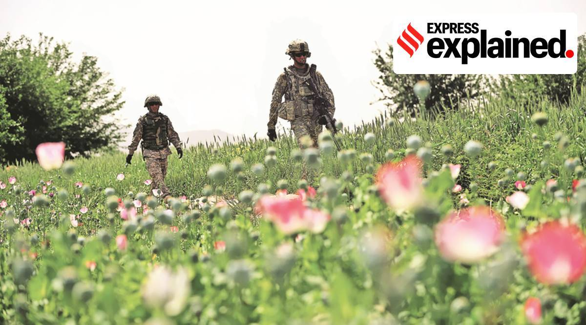 Explained: Heroin seizures from Arabian Sea as Afghanistan fell to Taliban