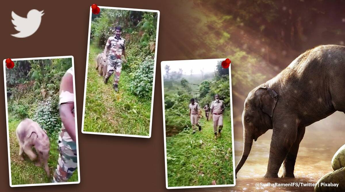 Foresters help baby elephant reunite with mother in viral video from Tamil Nadu, tamil nadu elephant rescue viral video, trending, indian express, indian express news
