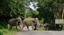 Assam: Three elephants electrocuted to death in last two days