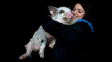 pandemic pets, coronavirus pandemic, excotic animals pets