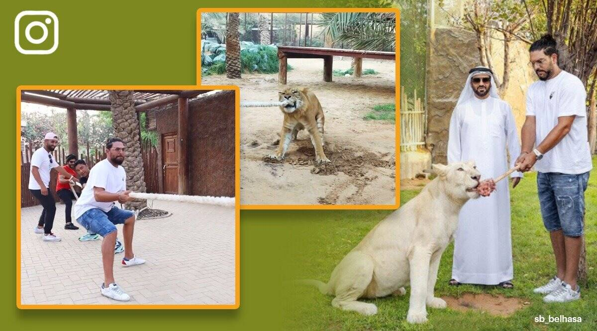 yuvraj singh, yuvraj singh liger tug of war, yuvraj dubai fame park, dubai animal park yuvraj singh, viral videos, odd news, sports news, indian express